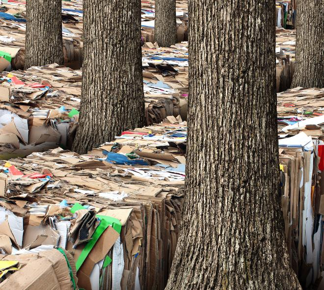Утилизация макулатуры способствует сохранению лесов