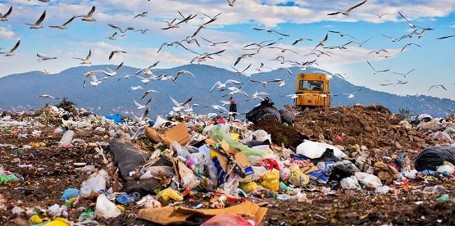 раздельный сбор мусора,ситуация с мусором